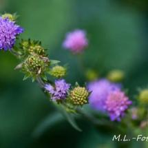Blaue Blüten am Waldesrand